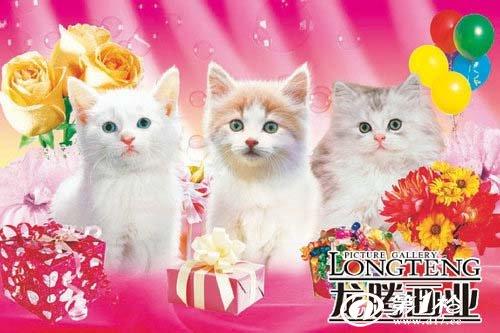 动物墙画 狗猫墙画/海报