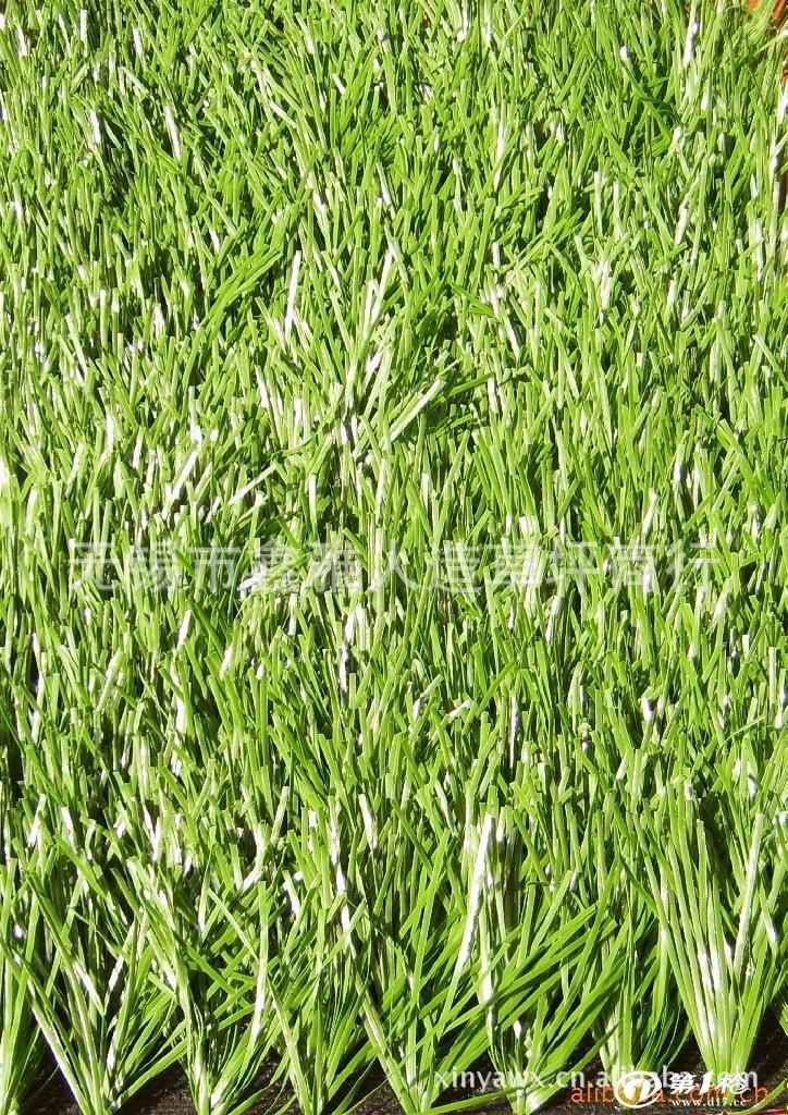 壁纸 草 成片种植 风景 绿色 植物 种植基地 桌面 724_1024 竖版 竖屏